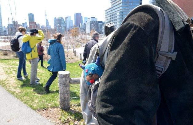 Edgar is in the side pocket of a backpack.  He is with a group of people in downtown Toronto - the CN Tower can be seen in the distance.