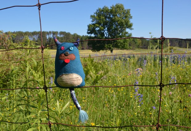Edgar is standing on a wire fence beside a field of long grasses and wild flowers.  Trees are in the background.