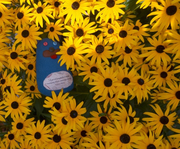 Edgar is lying amongst many black eyed Susan flowers, yellow flowers with black centers.