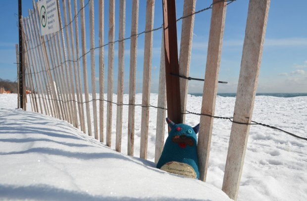 Edgar is sitting in the snow at the bottom of a snowfence beside Lake Ontario.  Snow and blue sky.