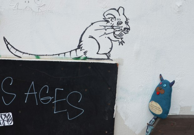 graffiti drawing of a rat (line drawing in black) on a white wall. Edgar is sitting on a post beside the wall looking at the rat.