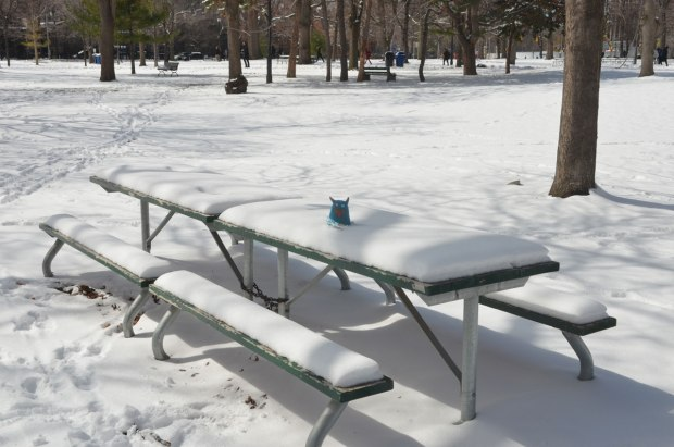 Edgar sits on a snow covered picnic table in a snow covered park with a lot of trees around