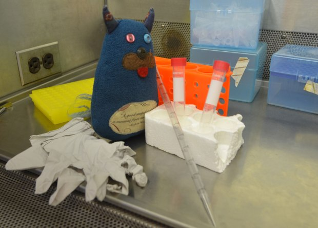 Edgar is standing on a desktop in a science lab, he has a pipette and some test tubes and a pair of rubber gloves.